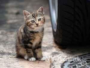 1397094637_1225812276_city_homeless_cat_kdn-002553-x