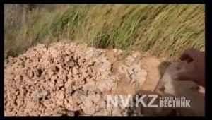 грязевой колодец
