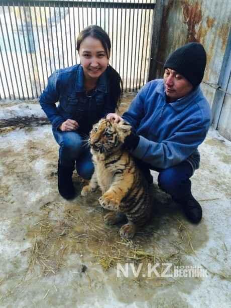 сотрудники зоопарка с тигренком