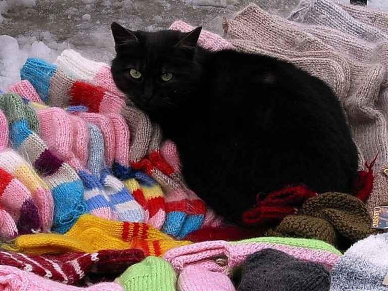 Связать носочке коту