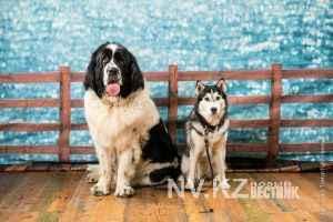 Собаки-терапевты. Фото Т.Кудеринова