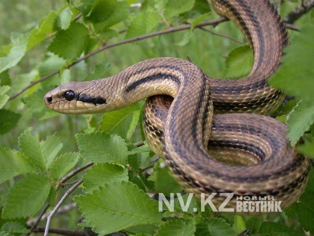 Сегодня, 16 июля отмечается международный день змей.